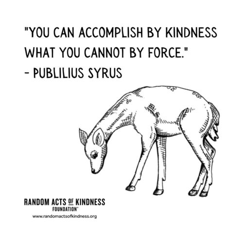 You can accomplish by kindness what you cannot by force Publilius Syrus