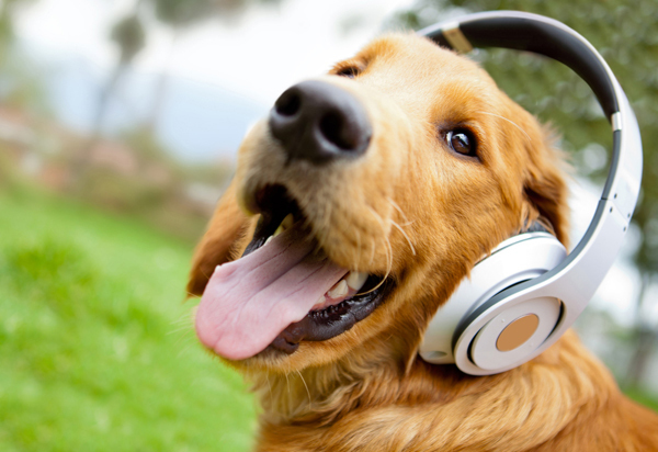 Large 1518792645 cute dog listening to music 1 1